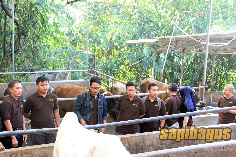 Pelatihan-bisnis-sapi-a.k-31-7