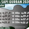 Harga Promo Sapi Qurban Sapibagus 2020 (7)-min