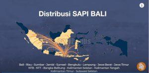 Peternakan Sapi Pulau Bali
